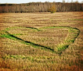Nose Hill Heart • Guerrilla Hearts